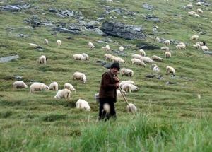 רועה צאן
